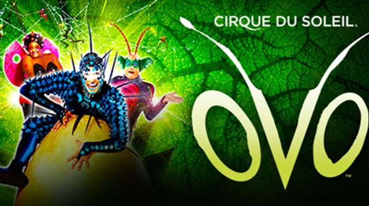 Buy Cirque Du Soleil: Corteo tickets at Jacksonville Veterans Memorial Arena from the official 694qusujiwuxi.ml site.